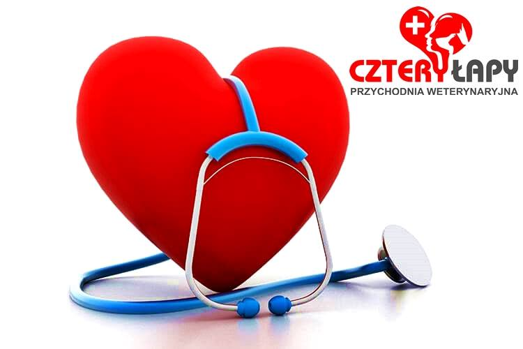 Konsultacje kardiologiczne 24 maj 2019